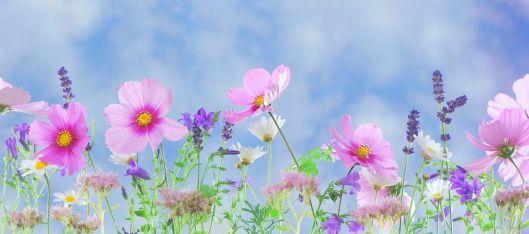 wild-flowers-571940__480