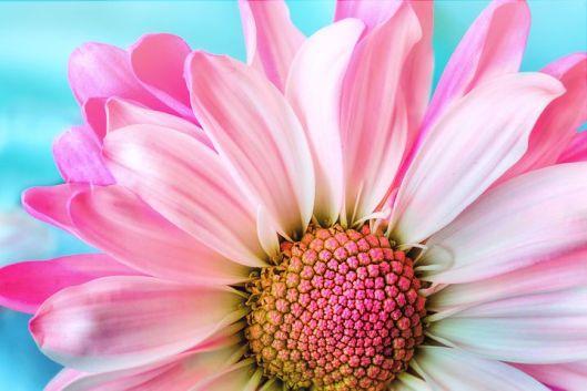 flower-3140492__480 (1)