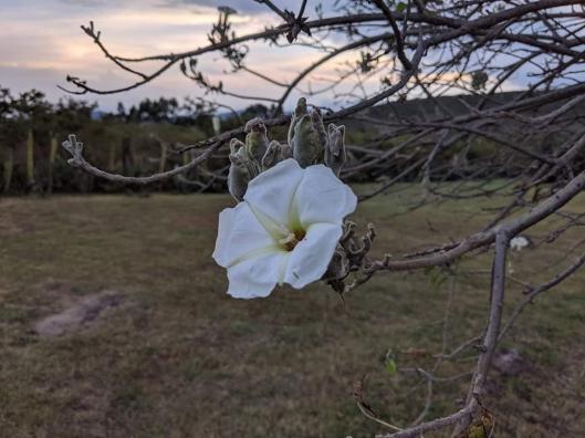Anne1 -- Flower
