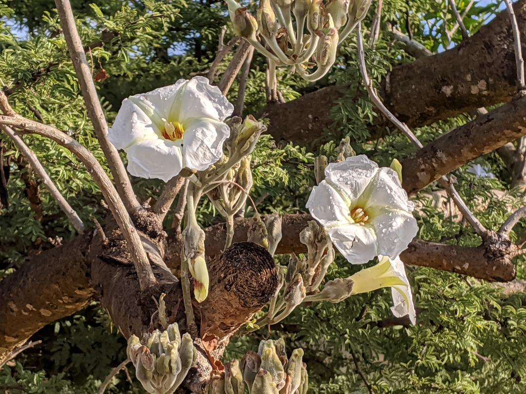 Guanajuato Flores